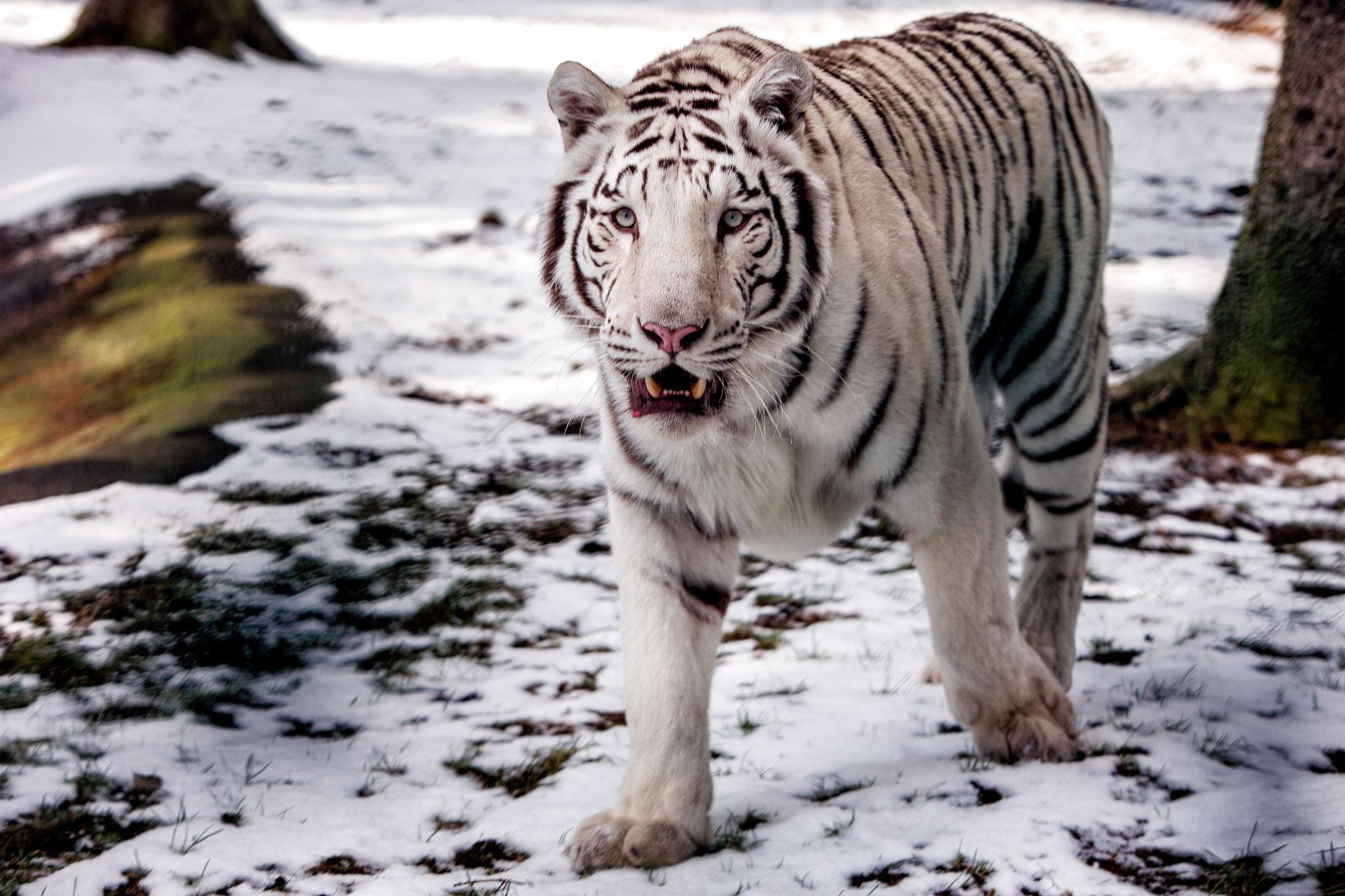 Ein enormer finanzieller und zeitlicher Aufwand ist betrieben worden, um die von der Redaktion gewünschten Wildlife-Fotos zu realisieren.