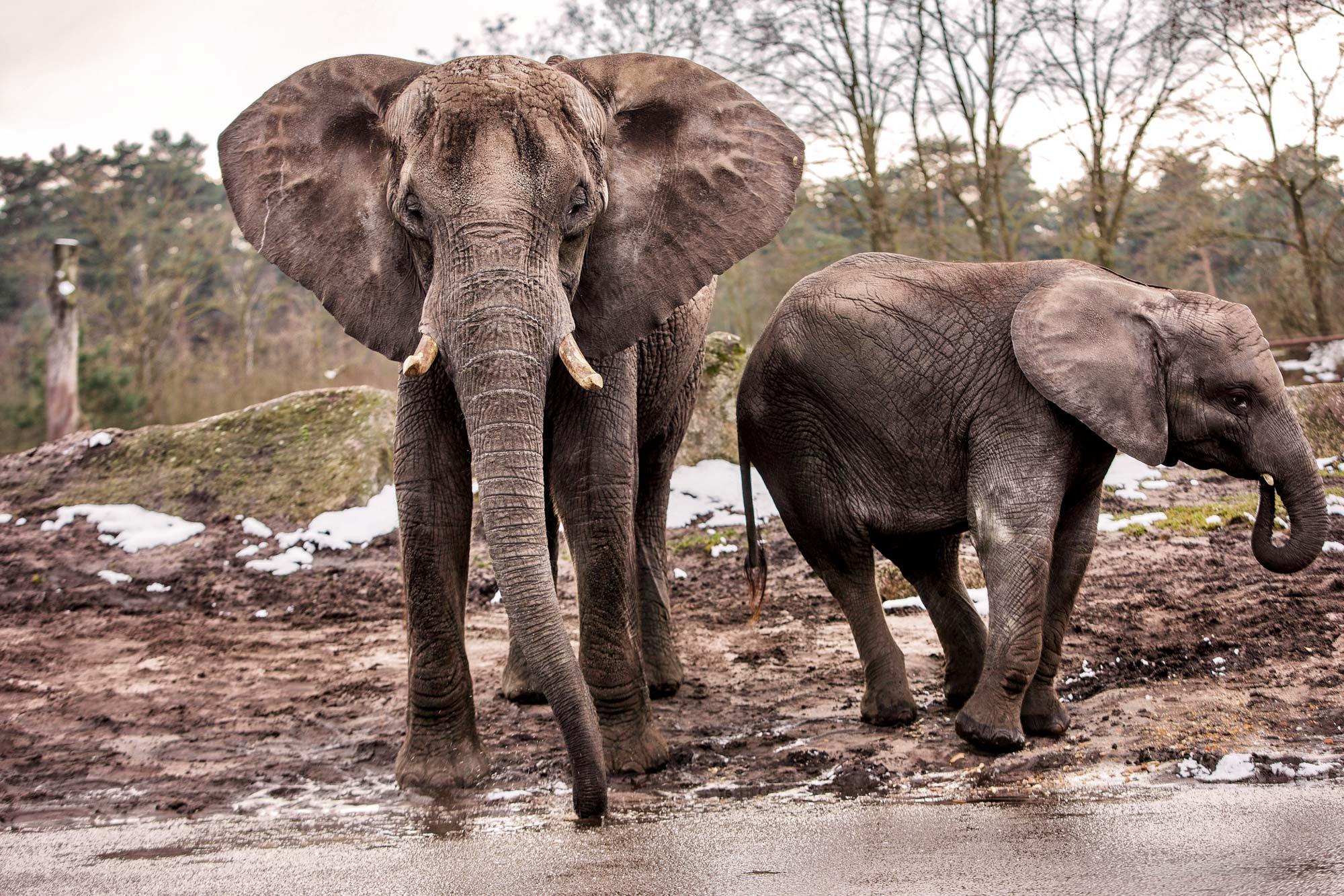 »Und wenn Sie schon einmal da sind, bringen Sie uns bitte auch gleich Fotos von Elefanten mit!« Wo in Redaktionen gespart wird, gibt es kein Budget, einen Fotografen an exotische Plätze zu schicken. Warum auch, wenn man den Job an einem Tag im Serengeti-Park Hodenhagen erledigen kann? Und das mit dem Schnee merkt vielleicht keiner!