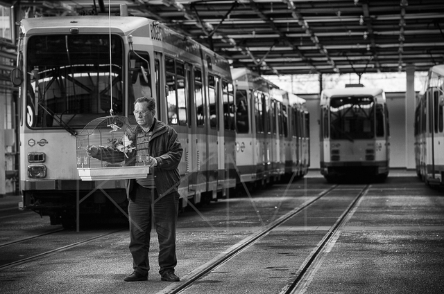 Günter Kucharski im Straßenbahnbetrieb der BOGESTRA in Bochum, ehemals Zeche Engelsburg.
