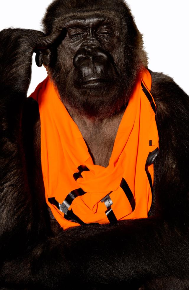 Gorilla Weibchen »Boma«hat sich für ein Tape-Shirt von Grit & Jerszy Seymour entschieden.