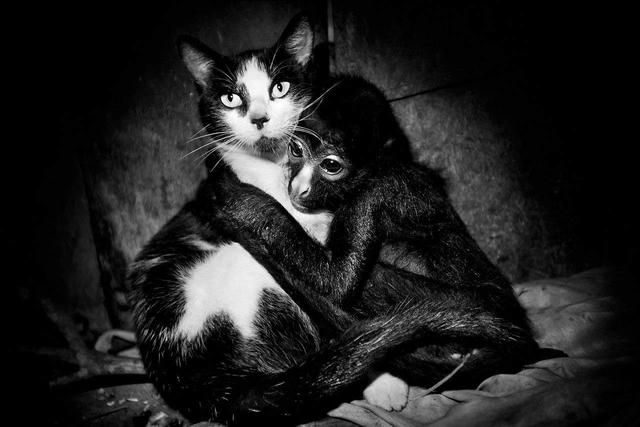 Wie Affe und Katze. So niedlich geht es sonst nie zu in Mads Nissens dunklen, elegischen Bilderbogen seiner Reise in den Regenwald.