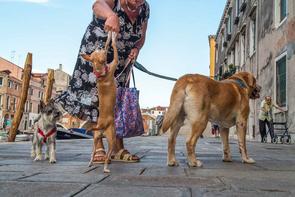 Den Bewohnern wird die Stadt zu teuer, weniger als 58.000 Menschen leben nur noch in Venedig, 4000 Hunde sind registriert.