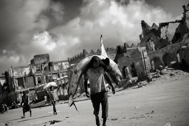 Somalia. Ein junger Mann trägt einen Hai zu einem Fischmarkt.