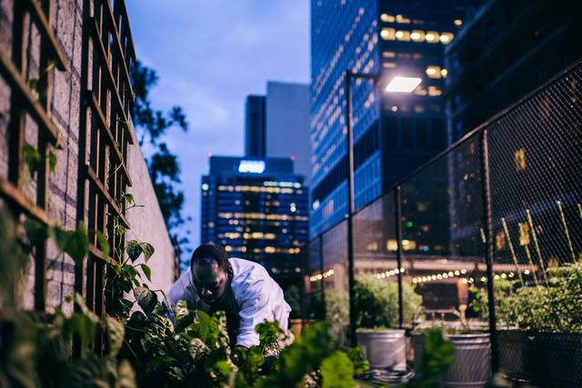 Der Jonathan Club in Downtown Los Angeles ist ein Privatclub, auf dessen Dach ein Garten angelegt wurde. Die dort angebauten Gemüse und Kräuter werden für Cocktails und Speisen wie den »Rooftop Salad« verwendet.
