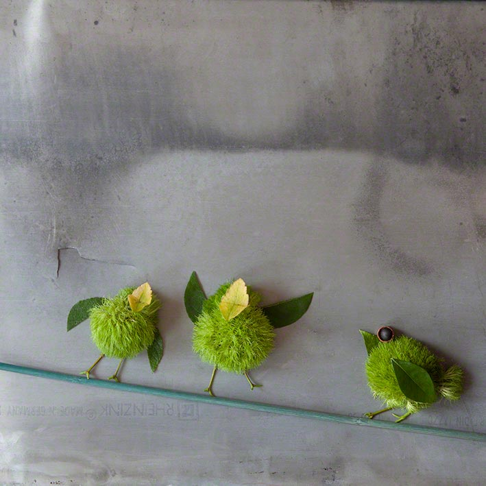 Wie die Vögel auf der Stange…