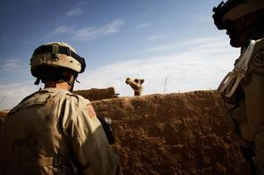 Soldaten des 3. Panzerkavallerieregiments fahnden zusammen mit irakischen Soldaten in und um Bi'aj, einer Stadt in der Nähe der syrischen Grenze, nach gesuchten Personen und Waffen.