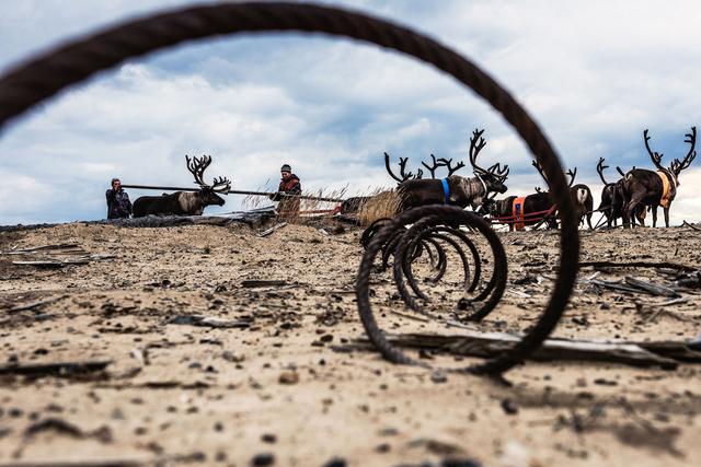 An dem zurückgelassenen Müll der Erdölsucher können sich die Rentiere verletzen.