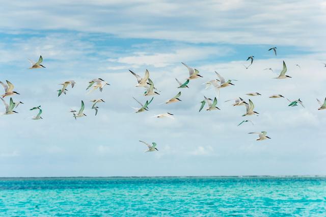 Bild 7: Vögel über dem Meer vor der Île des Pins, Neukaledonien.