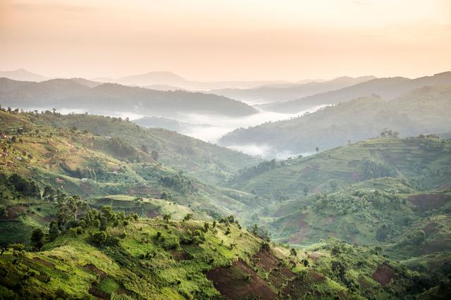 Bild 12: Teeplantage im Südwesten Ugandas.