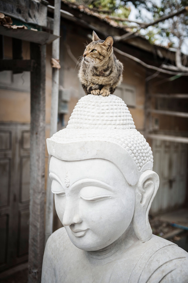 Bild 6: Katze auf einer Buddhastatue in Mandalay, Myanmar.