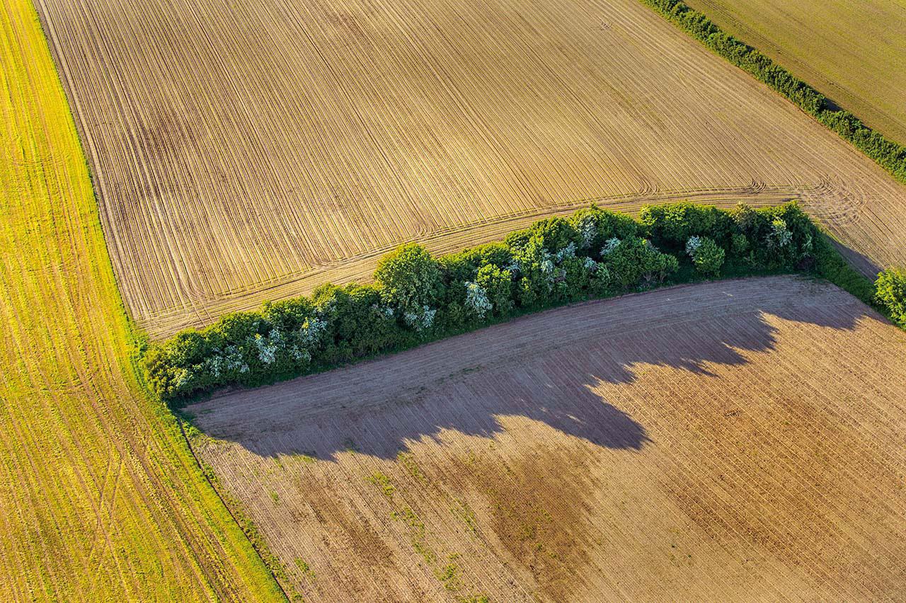 Knicklandschaft mit Heuschnitt in Schleswig-Holstein aus der Vogelperspektive. Da ihm der Anschluss geraubt wurde, ist dieser Knick etwas verloren in der intentsiv genutzen Kulturlandschaft.